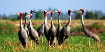 Du ngoạn vườn quốc gia Tràm Chim