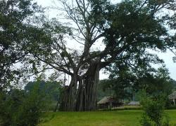 Hà Nội – Cây Đa Tân Trào – ATK Định Hóa Thái Nguyên, 1 ngày, đoàn riêng
