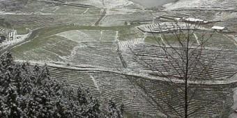 Tuyết rơi phủ trắng Sapa
