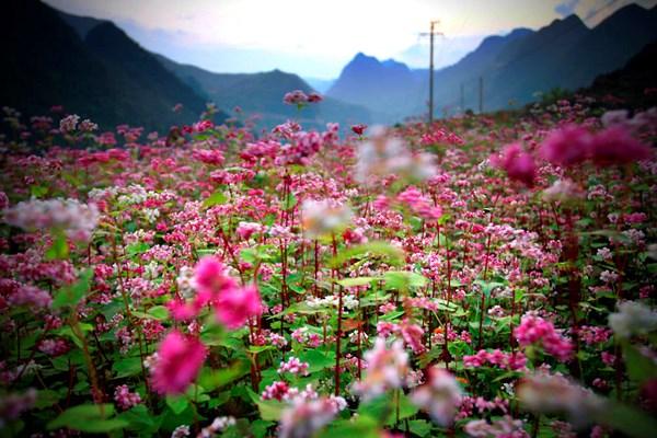 Lên Cao nguyên Hà Giang mùa Hoa Tam Giác Mạch