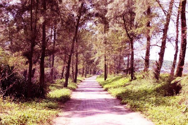 Con đường Tình Yêu trên đảo ngọc Cô Tô